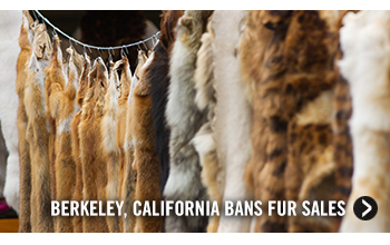 Berkeley, California Bans Fur Sales