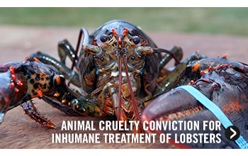 Animal Cruelty Conviction for Inhumane Treatment of Lobster