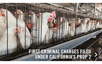 First Criminal Charge Filed Under California's Prop 2