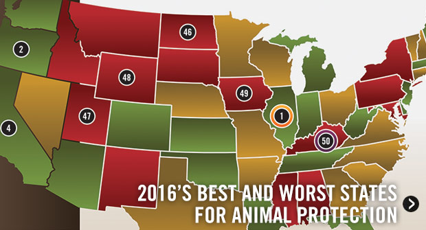 2016's Best and Worst States for Animal Protection