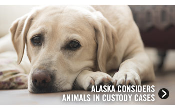 Alaska Considers Animals in Custody Cases