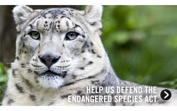 Help Us Defend the Endangered Species Act