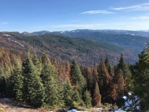 Upper Horse Creek, the Condrey Mountain Inventoried Roadless Area, Johnny O'Neil Late Successional Reserve, and the Abney Fire viewed from the Siskiyou Crest. The burned forest at the center of this photograph is proposed for clearcut logging by the Klamath National Forest. Photo by Luke Rudiger