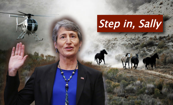 Tell Sally Jewell: Step in to save America's wild horses